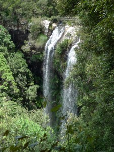 Twin Falls - Springbrook