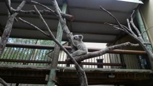Daisy Hill Koala Centre