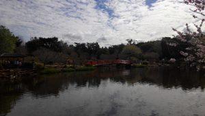 USQ Japanese garden